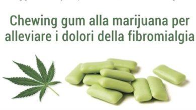 Marijuana,confetto in chewing gum per alleviare i dolori della fibromialgia.
