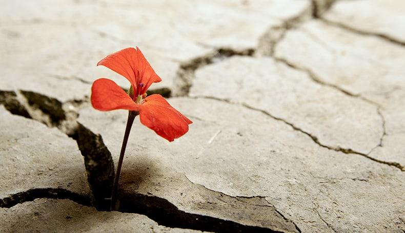 Come trasformare il dolore in forza