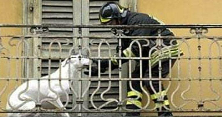 Verona: multa di 500€ per chi lascia i cani chiusi sul balcone