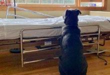 Moose il cane che aspetta il padrone defunto davanti al letto di ospedale