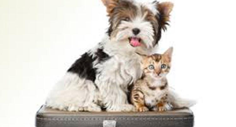 Portare gatti o cani in vacanza ecco tutti i consigli per farlo bene