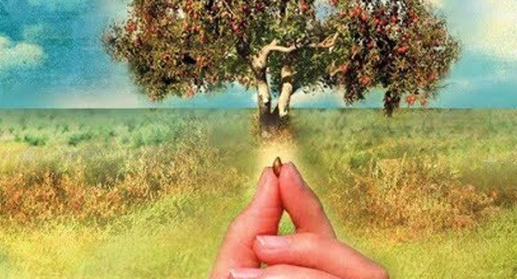 La pianta della pazienza il racconto per capire l'importanza della pazienza